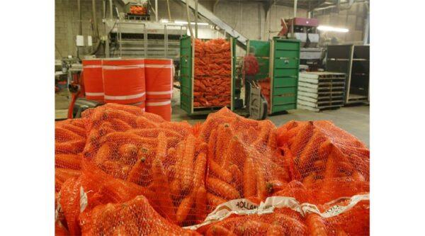 Spiders Net Carrots bag bulk bag